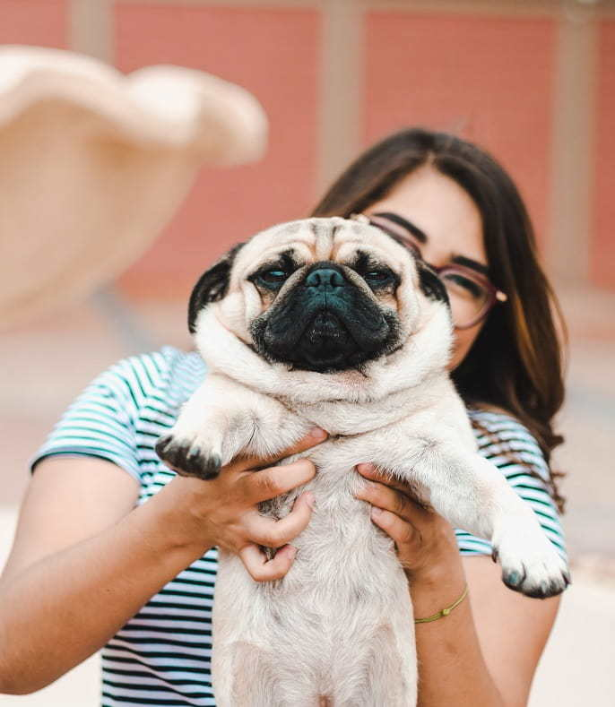 Cute pug and teen in a senior picture