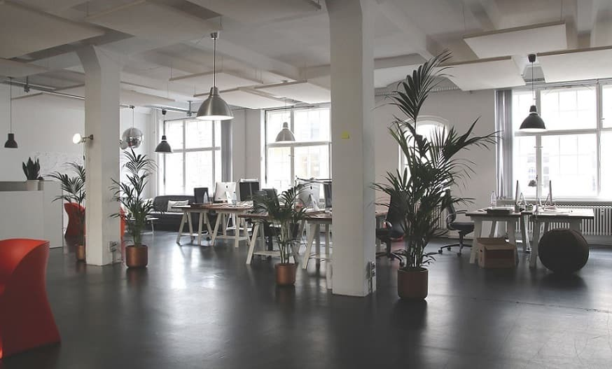Best office plants to fight indoor air pollution